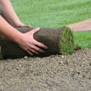 Рулонный газон: виды, преимущества и недостатки, как укладывать