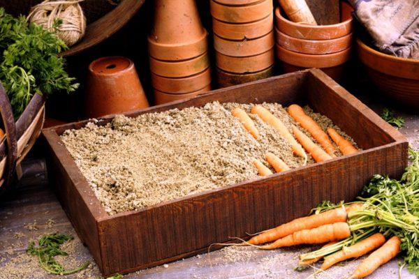 Подготовка моркови к хранению